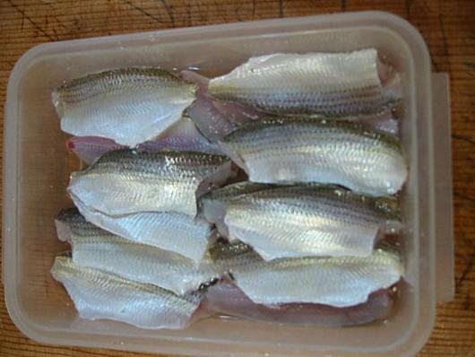 コノシロの若魚