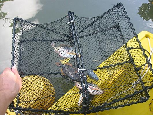 前もって釣ったのを冷凍してあった。