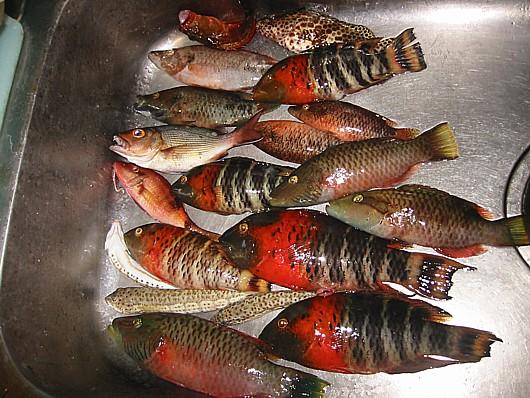 みんな白身魚です。