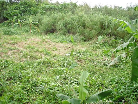 フルーツジャングル予定場所。