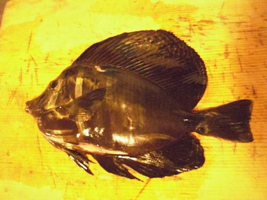 ヘンな魚。