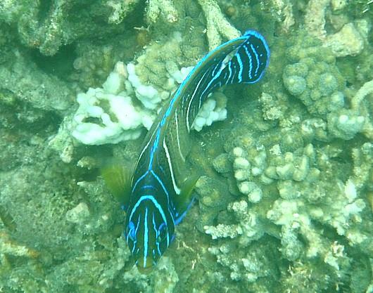 熱帯魚の海。