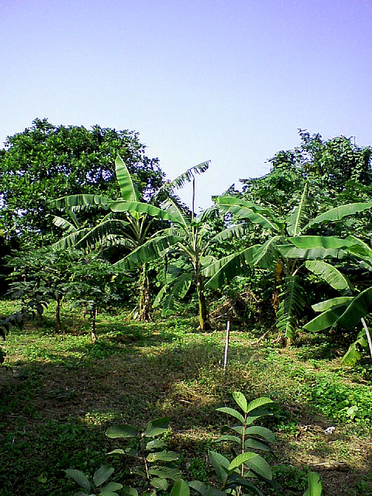 ZAKI農園