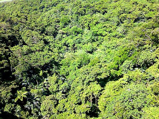 ハブのいる危険なジャングル。