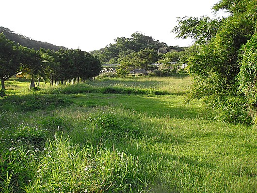 防風林も備えられた素晴らしい農地!