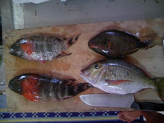 左ヤシャベラ、右上クマドリ、右下ハマフエフキ(タマン)