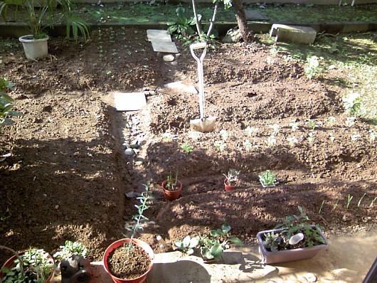 小さな菜園